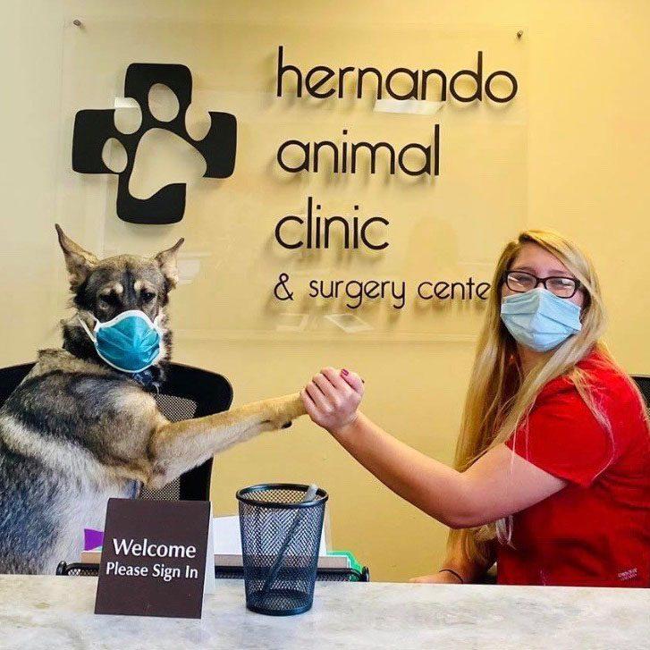 Hernando Animal Clinic and Surgery Center